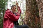 Observer Tree- Tasmania